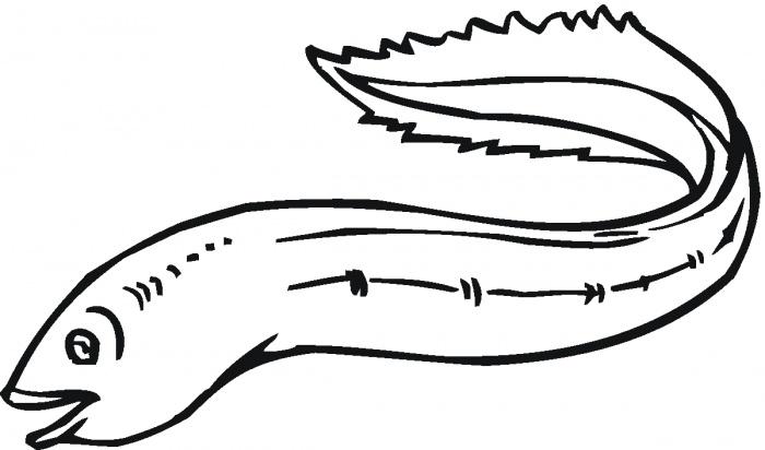 Eels clipart Free Art Eel Clip Free