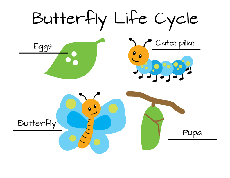 Egg clipart butterfly life cycle #14