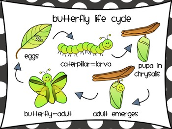 Egg clipart butterfly life cycle #8
