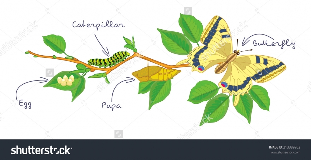 Egg clipart butterfly life cycle #12