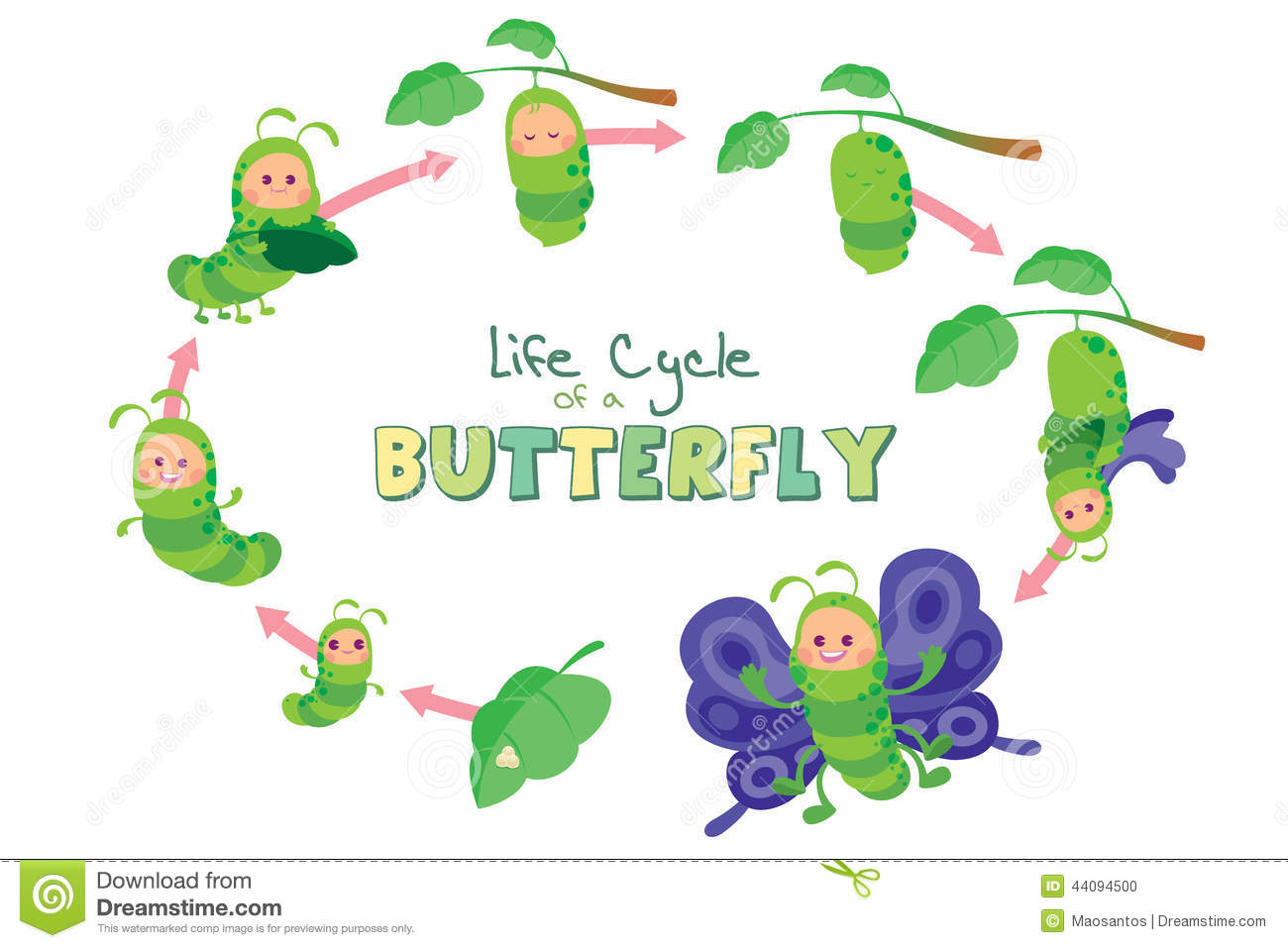 Egg clipart butterfly life cycle #13