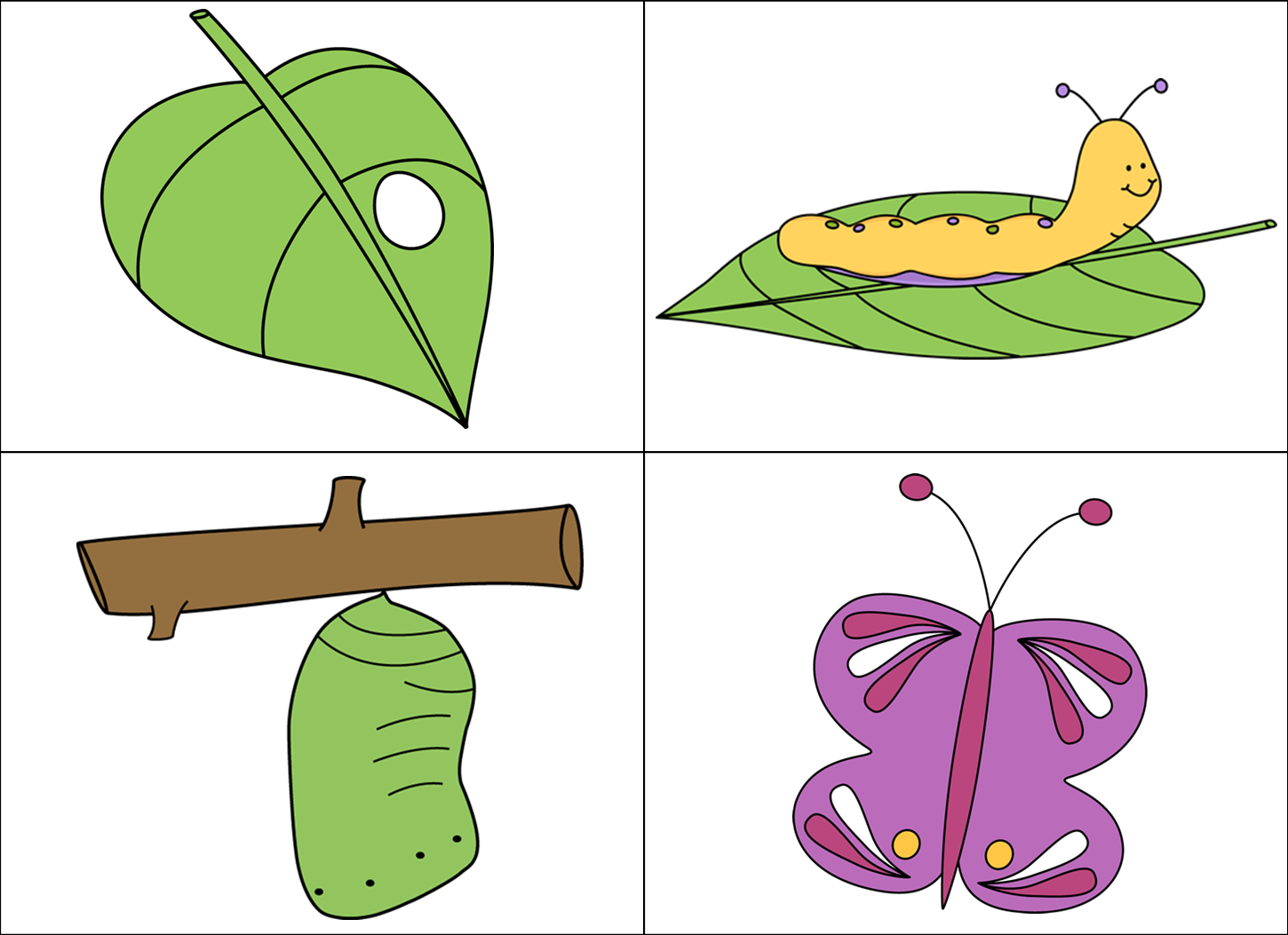 Egg clipart butterfly life cycle #7