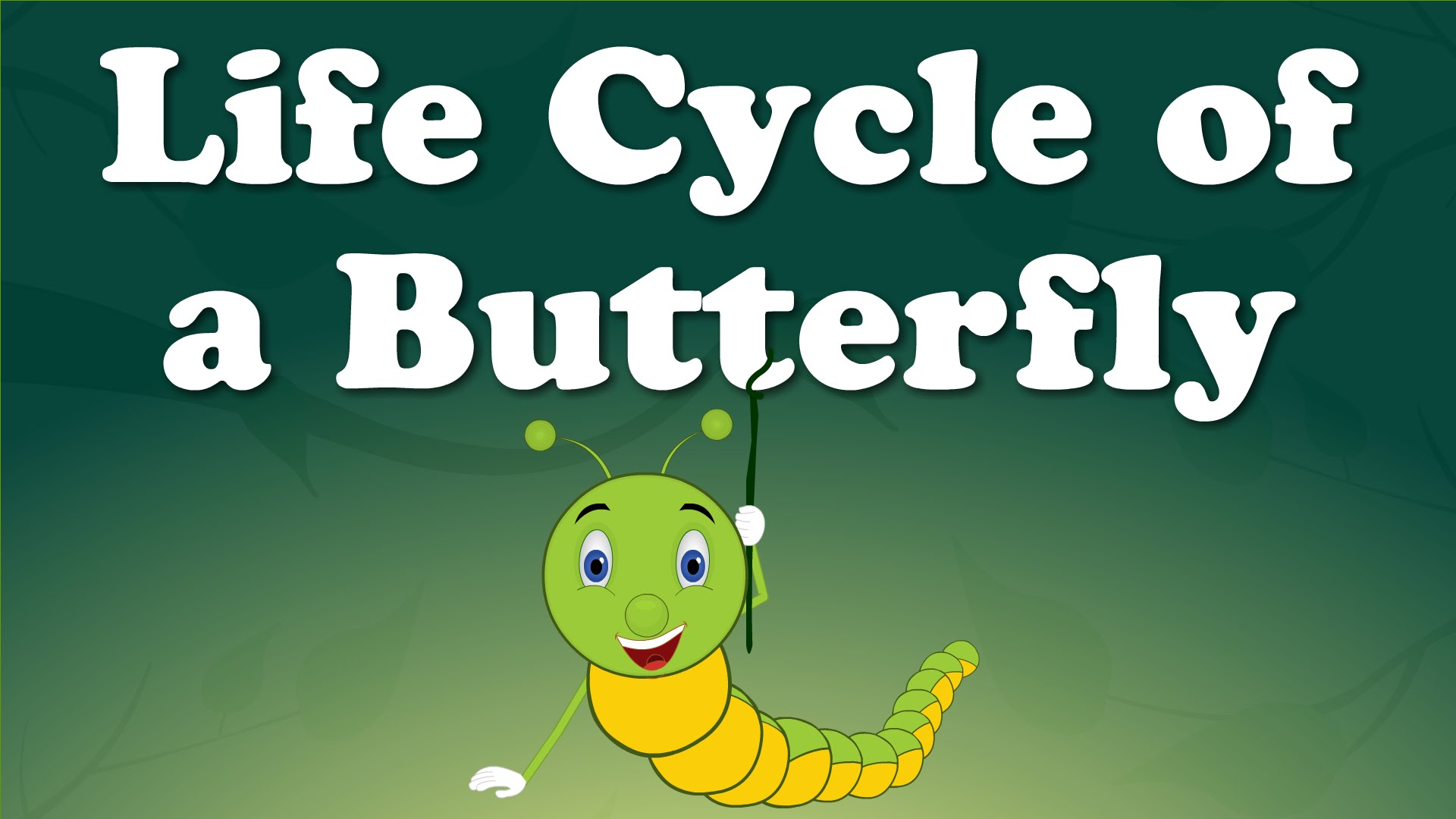 Egg clipart butterfly life cycle #15