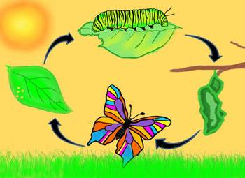 Egg clipart butterfly life cycle #6