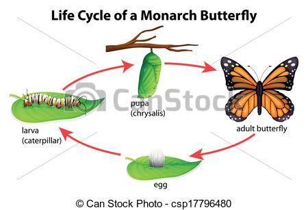 Caterpillar clipart butterfly cocoon Butterfly and Caterpillar clipart butterfly