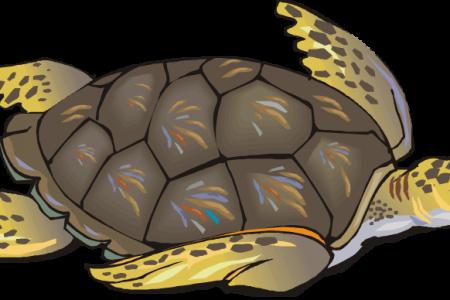 Sea Turtle clipart turtle egg #15