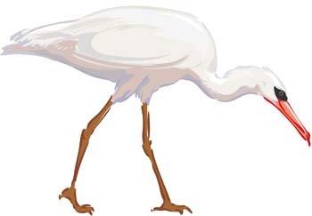 Egret clipart Cattle Download #9 Egret Download