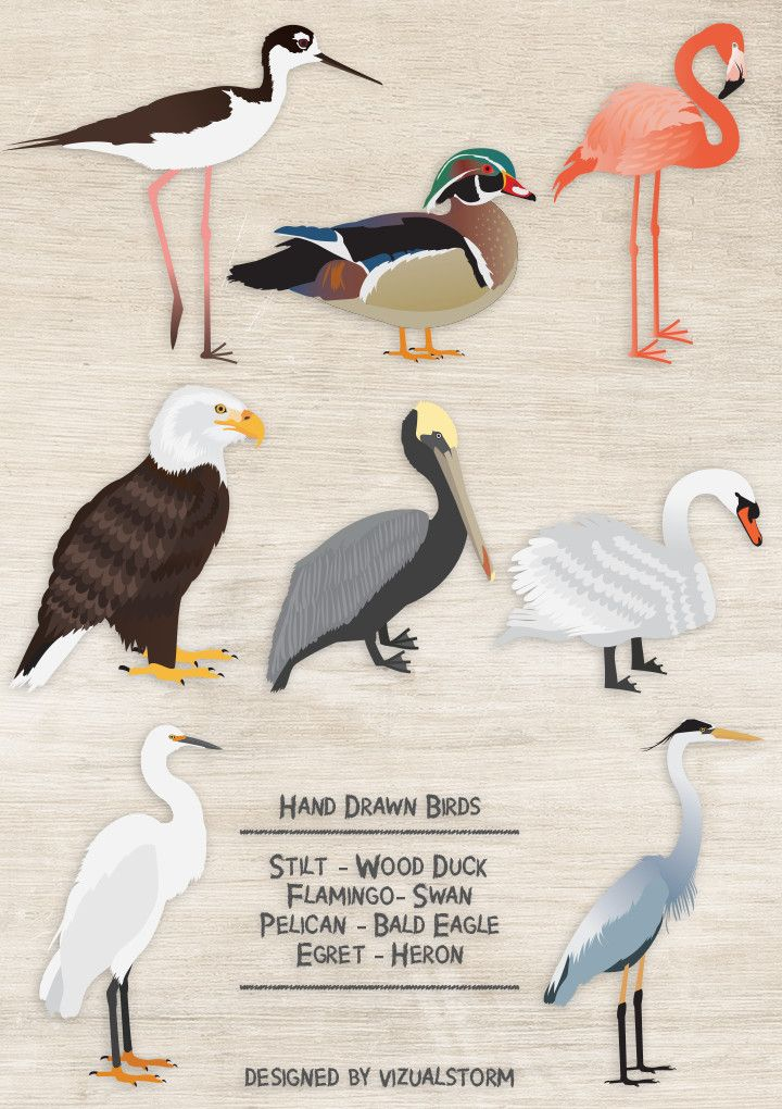 Wood Duck clipart woodland Clipart Bird Animal Animal 159