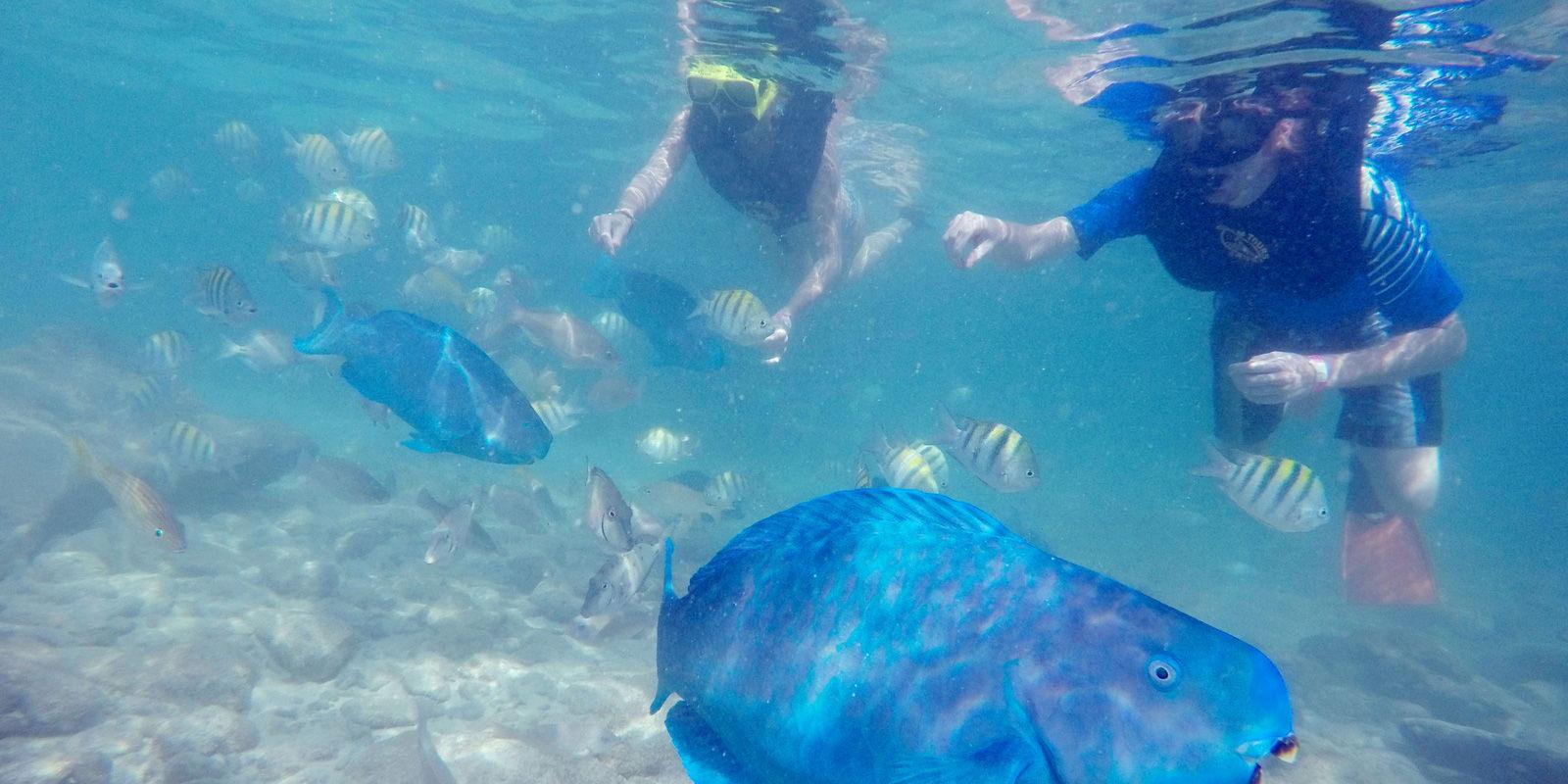 Eiland clipart beach scene Island Aruba island De slide