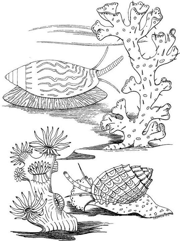 Eiland clipart coloring page Pinterest on on 99 kleurplaten!