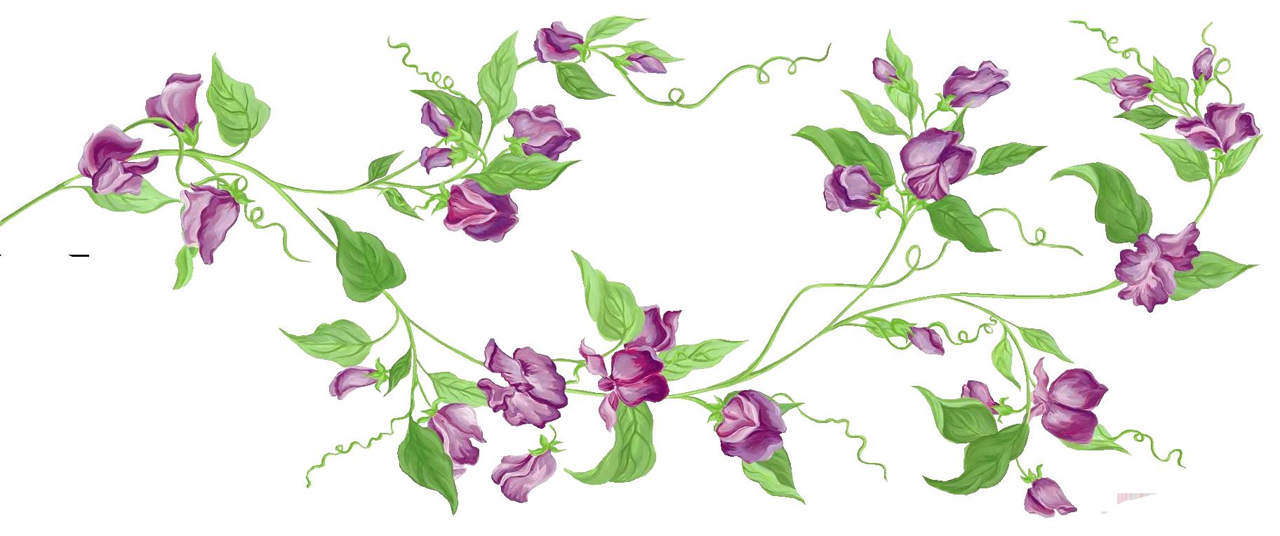 Element clipart floral decoration Floral Clipart Floral Free Transparent