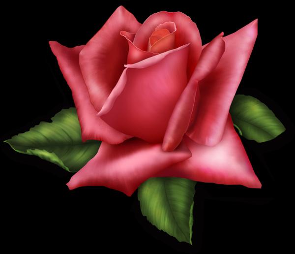 Element clipart transparent Rose*~ Rose Pinterest Transparent ~*♠️Clip