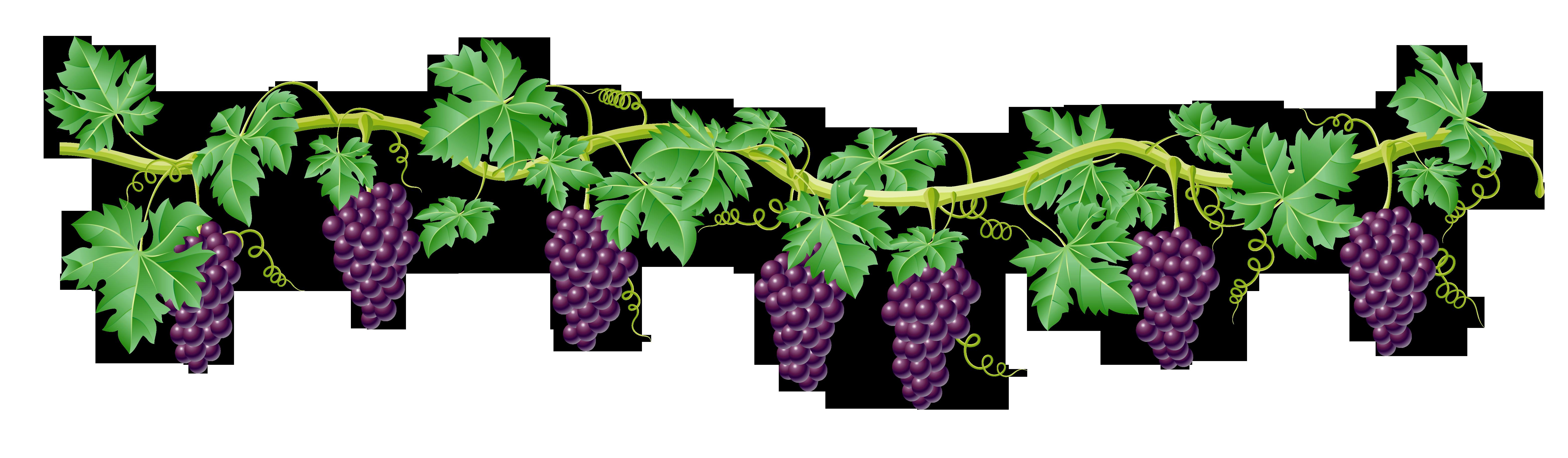 Decoration clipart vine Element Transparent Free Picture Art