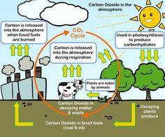 Elemental clipart environmental science General Cycles More Elemental Science