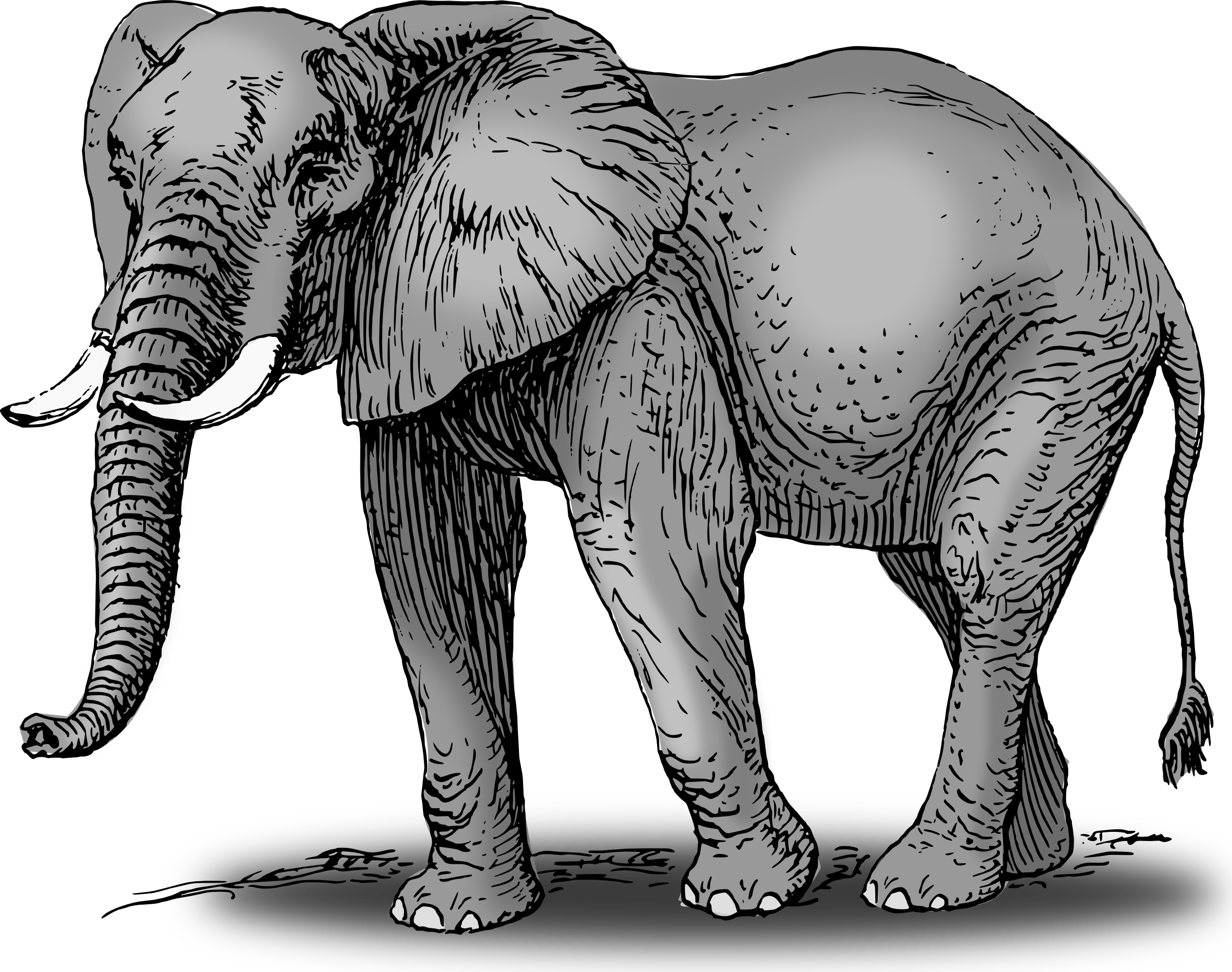 Asian Elephant clipart african elephant PDClipart Elephant art to Download