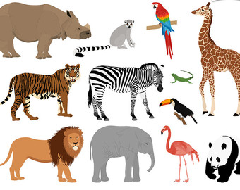 Iiii clipart tigers Zoo Animals Etsy Parrot clipart