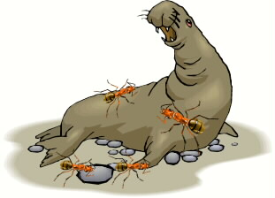 Elephant Seal clipart  Ant Elephant Seal and