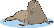 Elephant Seal clipart Seal elephant Graphics Free Clip