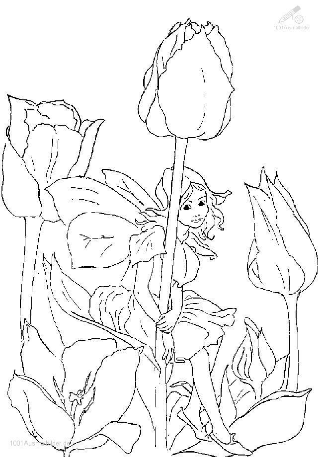 Elfen clipart coloring Ausmalbilder Und Und Tattoo Elfen