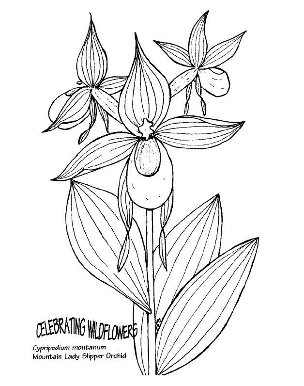Elfen clipart slipper Mountain Printable Orchid images for