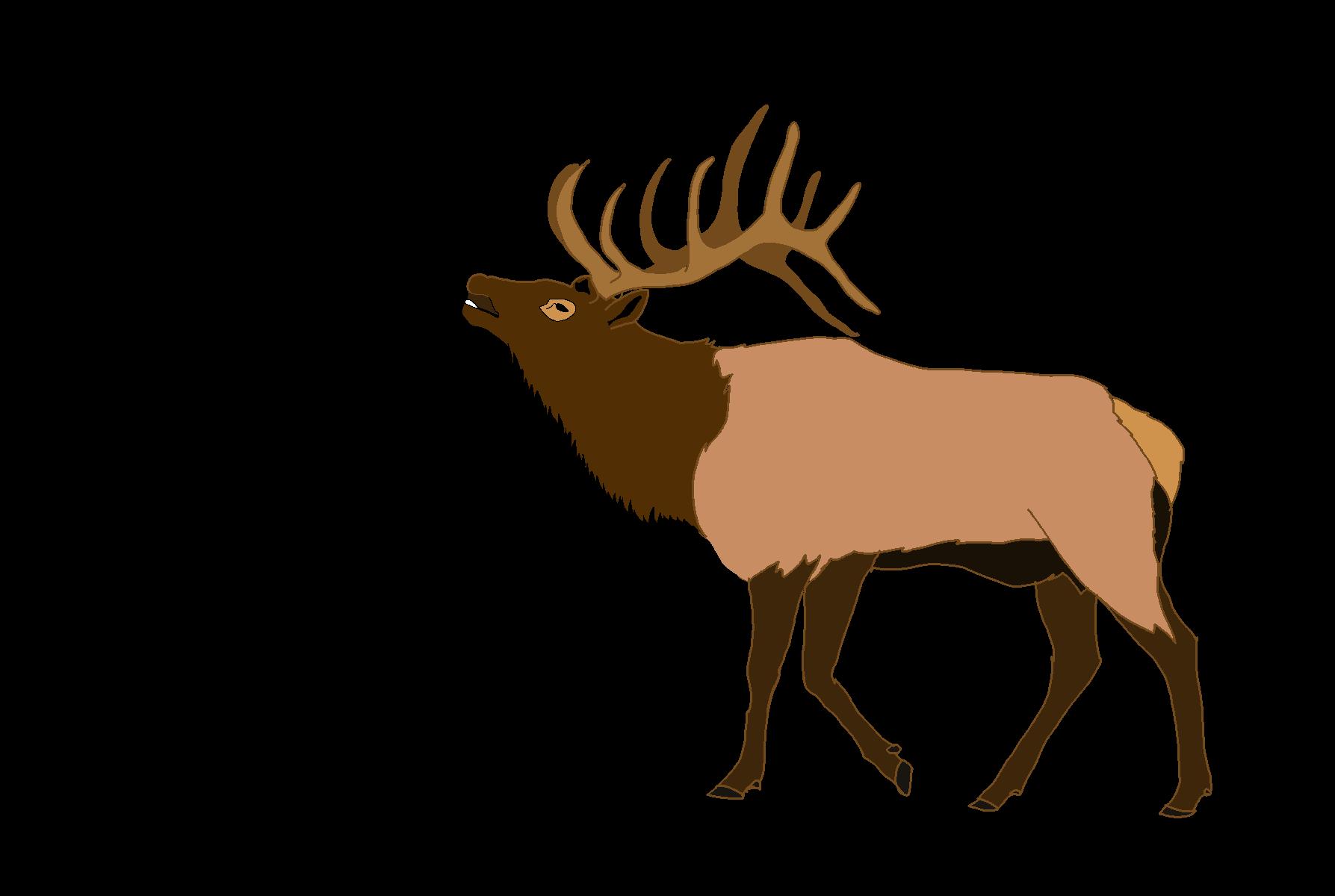 Elk clipart Free Clipart Top Elk 83