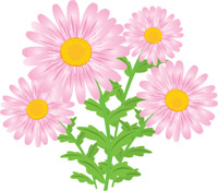 Elower clipart Graphics aster Free Pictures Clipart
