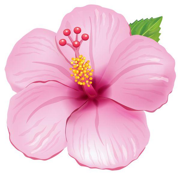 Red Flower clipart flower head Pink Pinterest 25+ PNG clipart