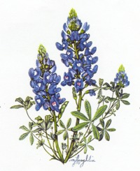 Wildflower clipart texas Bluebonnet Clipart Bluebonnet cliparts