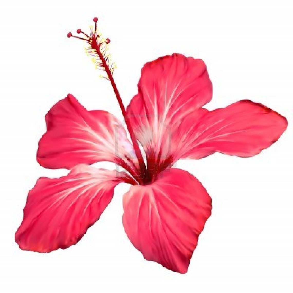 Red Flower clipart hawaiian #14