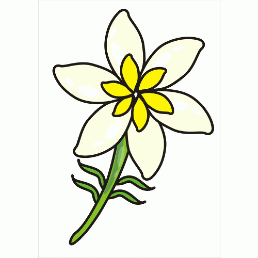 Jasmine clipart rose Best clipart clipart  flower