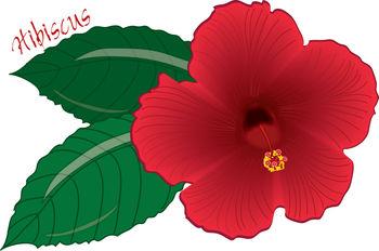 Red clipart gumamela #4