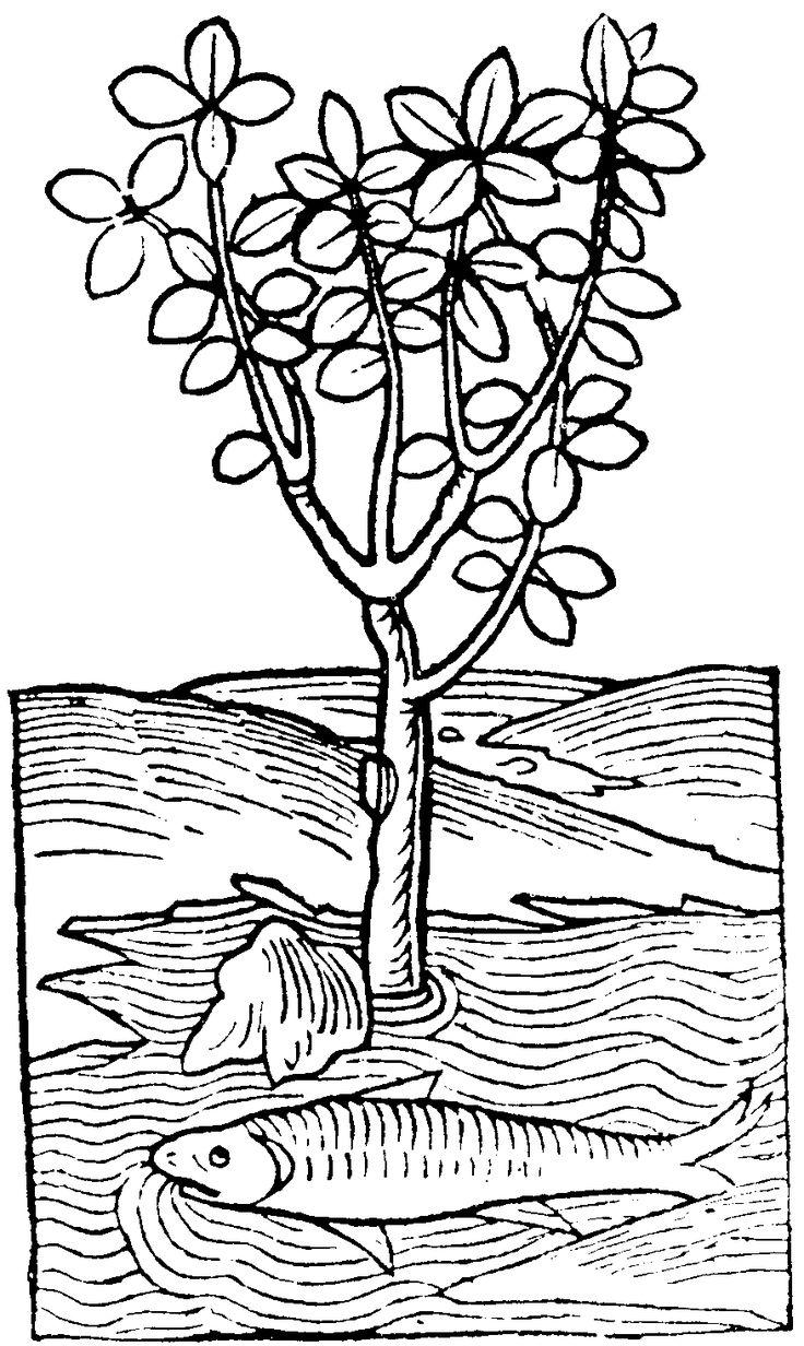 Elower clipart medieval #14