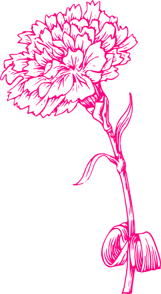 Carnation clipart pink carnation This art Pink at clip