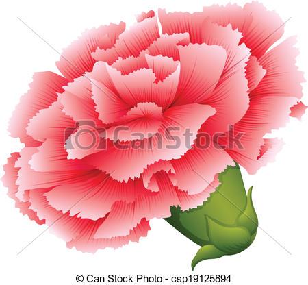 Carnation clipart pink carnation  fresh flower flower of