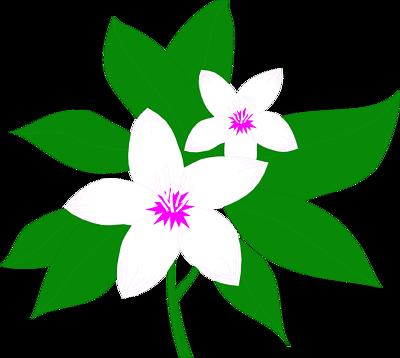Elower clipart sampaguita Clipart Flower Mogra com Jasmine