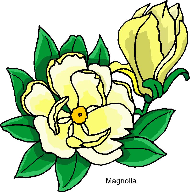 Elower clipart sampaguita Clipart  Flower Free Clip