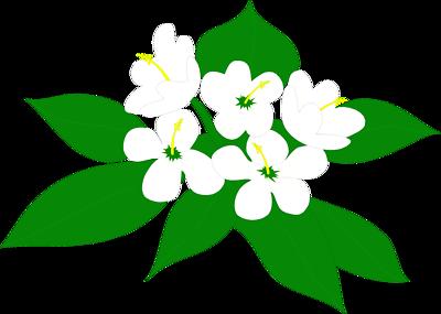 Elower clipart sampaguita Clipartsgram Clipart Flower Sampaguita Flower