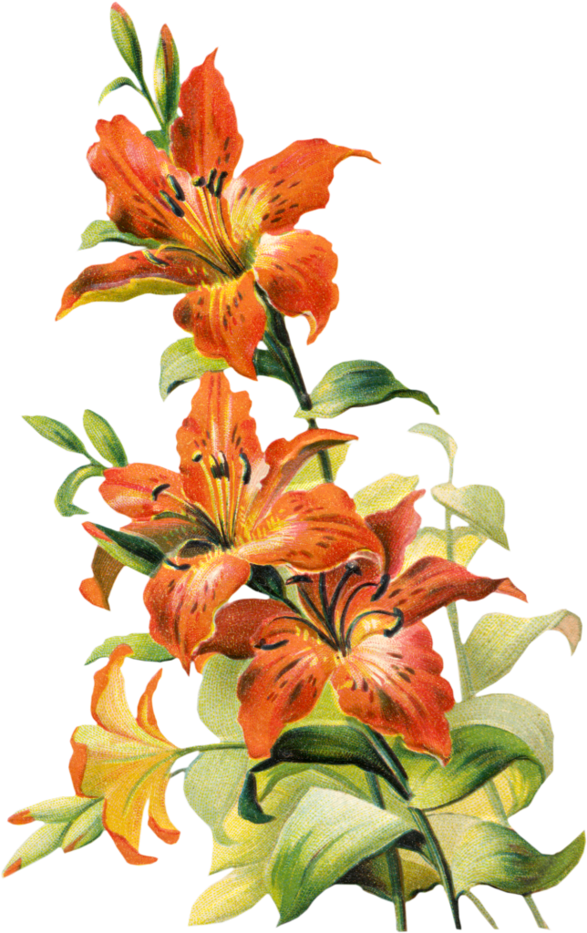 Vintage Flower clipart lillies Flowers Pinterest 2 Free Tigers