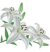 Elower clipart white lily On Royalty · Art lily