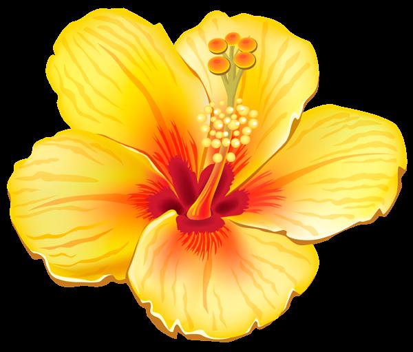 Tropics clipart yellow hibiscus #1