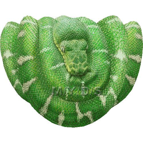 Emerald clipart boa Caninus) art picture Boa Large