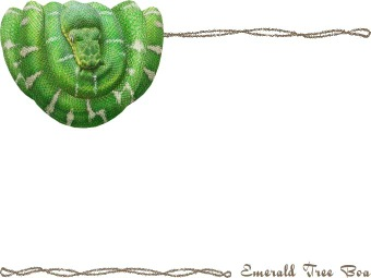 Emerald clipart boa Postcard Emerald clip Boa (Snake)