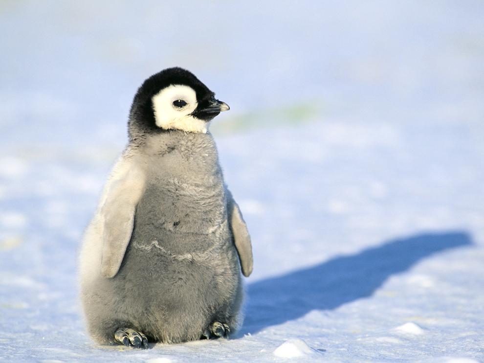 Pangolin clipart Penguin Clipart  PENGUIN PENGUIN CUTE PENGUINS