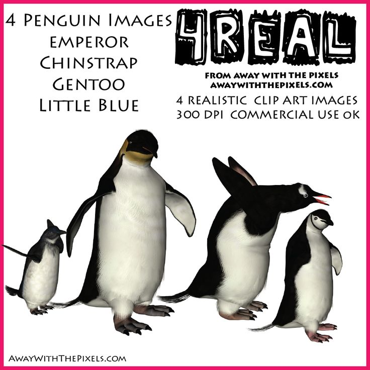 Penguin clipart realistic Little best 87 Chinstrap Gentoo