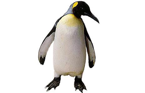 King Penguin clipart Clipart Penguin Printable Clip Images