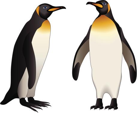 King Penguin clipart Org clipart art art animals