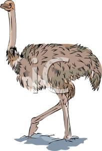Emu clipart Clipart Emu #6 Emu Emu