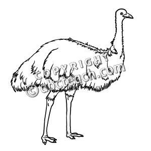 Emu clipart Clipart Clipart #11 #4 emu