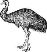 Emu clipart GoGraph Free Emu Clip Emu
