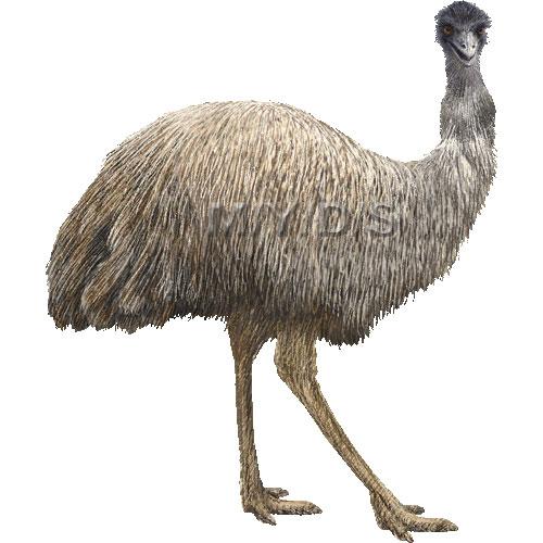 Emu clipart Clip (Free picture Emu Emus